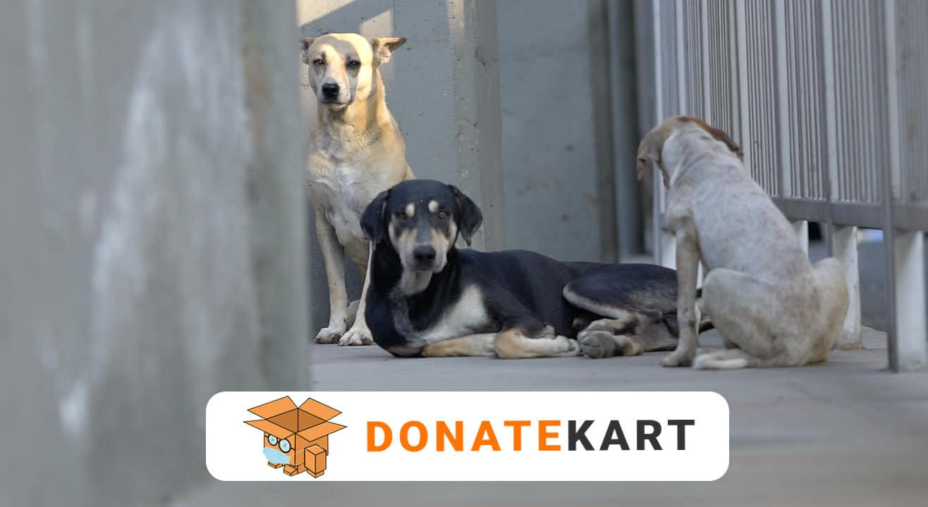 Donatekart | Help Feed the Stray Animals