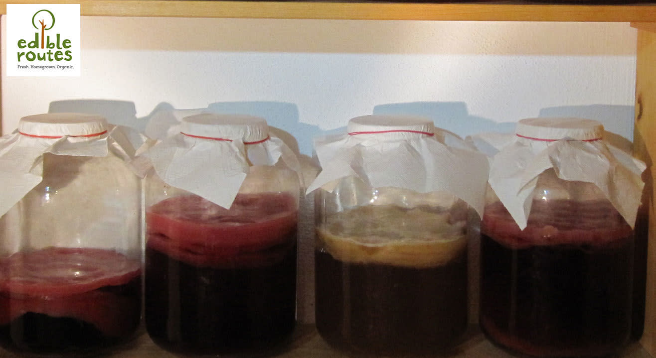 Kombucha Brewing Workshop: Learn To Make The Ancient Drink That's Fun, Healthy And Delicious