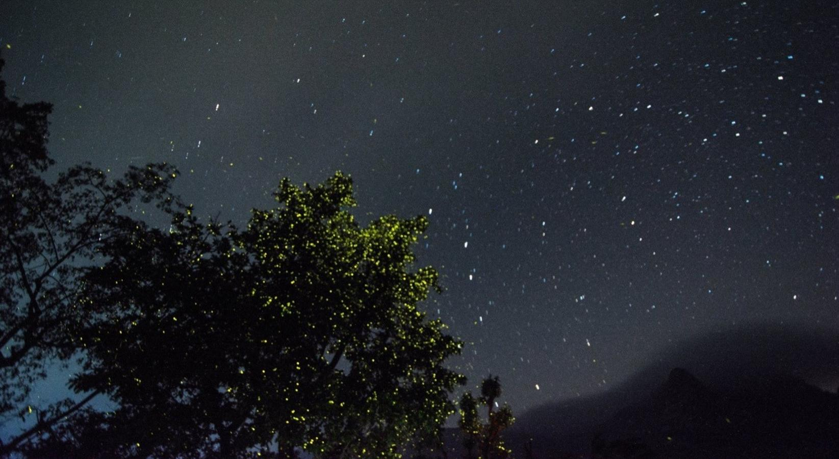 Now Is The Best Time to See Fireflies Near Mumbai & Pune