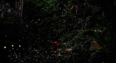 Fireflies Night Trek to Kothaligad