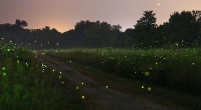 Bhandardara Fireflies Festival Camping