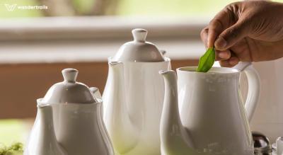 Wandertrails | Tea tasting and plantation walk