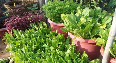 Organic Kitchen Gardening & Composting Workshop