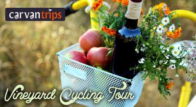 Vineyard Cycling