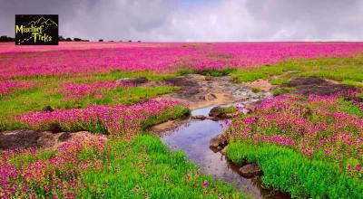 Kaas Plateu - Valley of Flowers Tour