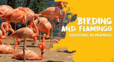 Bird Walk in Mumbai