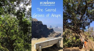 The Sacred Groves of Ahupe