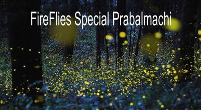 FireFlies Special Prabalmachi | Trek India