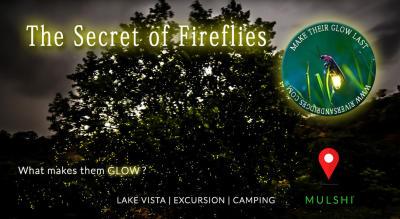 The secret of the fireflies batch 1