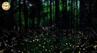 Fireflies Special Trek + Camp at Prabhalmachi | Adventure Geek