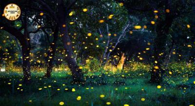 Fireflies Special Trek to Rajmachi Fort | Adventure Geek