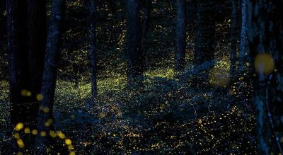 Fireflies Special Night Trek to Rajmachi Fort & Camping | Hidden Earth Adventures
