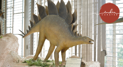It all started with a BIG BANG! - A walk through the Natural History Museum, Chandigarh