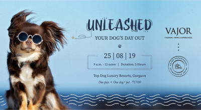 Unleashed :  Your Dog's Day Out - Vajor Experiences