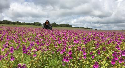 A Beautiful Day At 'The Valley Of Flowers' - Kaas Plateau