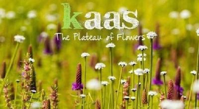 Kaas Plateau Tour | Travel Trikon