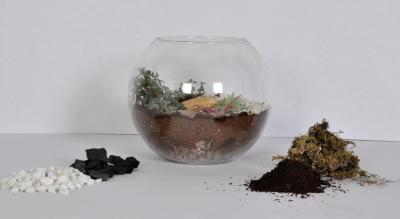 Terrarium and Dish Gardening