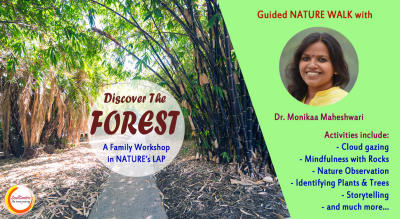 Discover the Forest: Guided Nature Walk