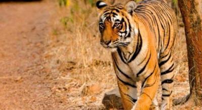 Bandhavgarh Wildlife Safari   Travel Trikon