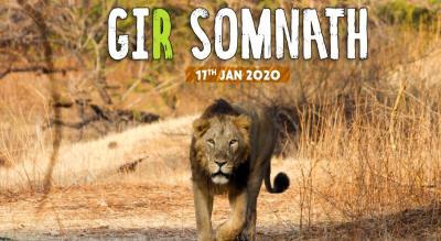 Gir Somnath Wildlife Safari | Travel Trikon