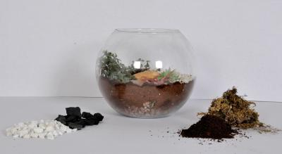Terrarium and dish gardening