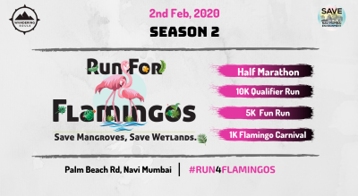 Run for Flamingos - Season 2