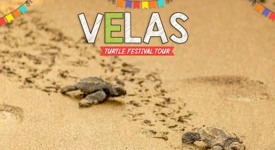 Velas Turtle Festival Tour with Trikon