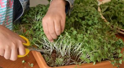 Microgreen Workshop (How To Lean super-fast food)
