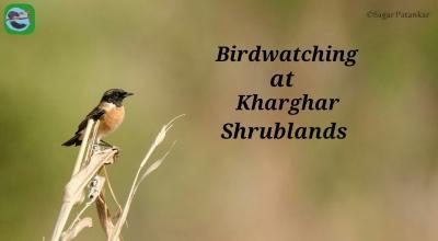 Birdwatching at Kharghar Shrublands
