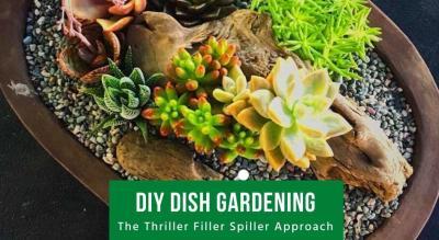 DIY Dish Gardening - The Thriller Filler Spiller Approach