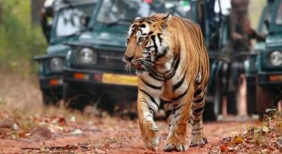 Ranthambore The land of legends - Motorcycle Tour