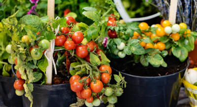 Spactre Masterclass : Vegetable Gardening : Grow Heathly and Fresh Herbs & Vegetables at Home