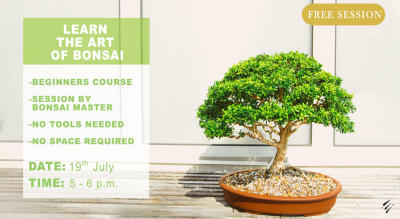 Bonsai for Beginners by Enlightened Sapiens
