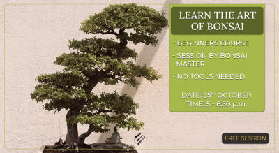 Learn the Art of Bonsai