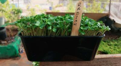 Online : Microgreen growing workshop