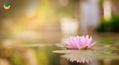 21 Day – Consciousness Detox