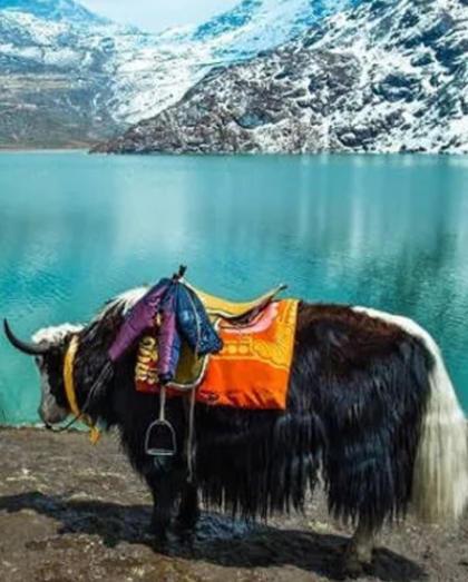 Bike trip to Sikkim | Global Corporate Tour