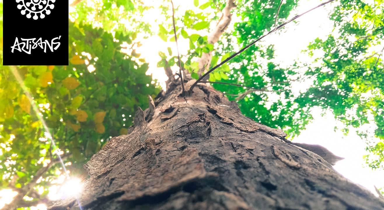Ask The Earth - Miti Desai