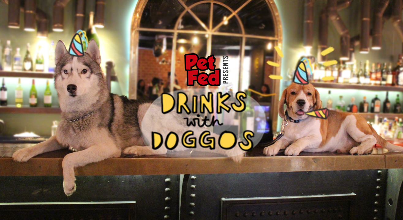Drinks with Doggos