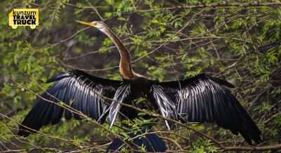 Birding In The Monsoons In Bharatpur