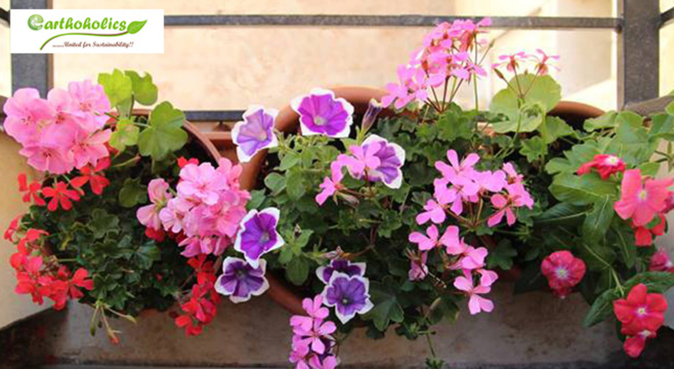 Ornamental Gardening and Landscaping Workshop by Earthoholics