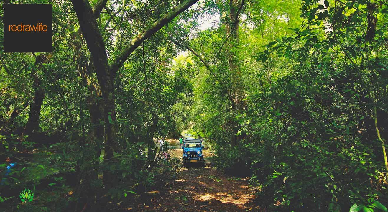 Wild Jungle Safari And Trekking At Konni