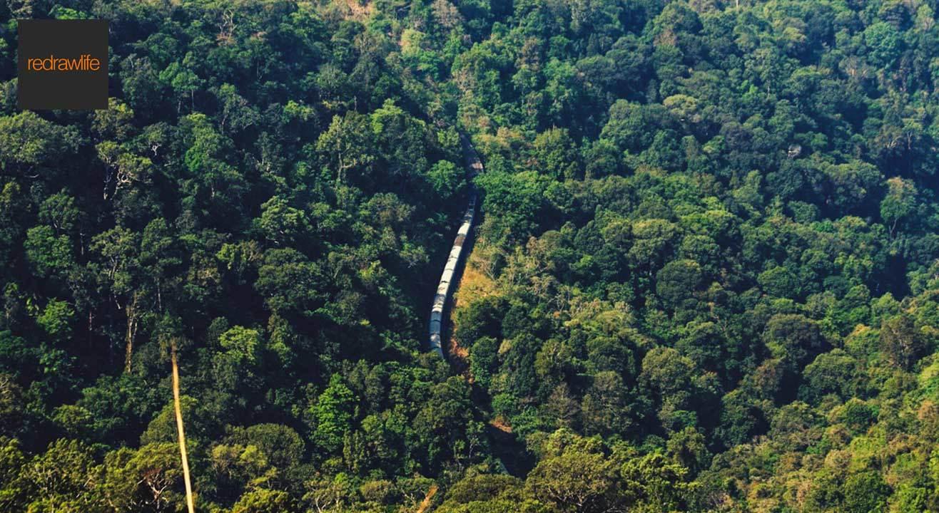 Green trails of Sakleshpur