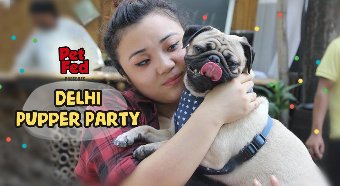 Delhi Pupper Party