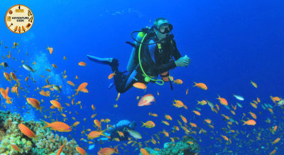 Navigate your water ways with Scuba Diving