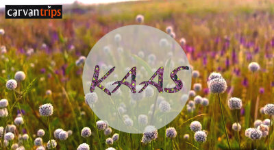 Roadtrip and Camping at Kaas Plateau