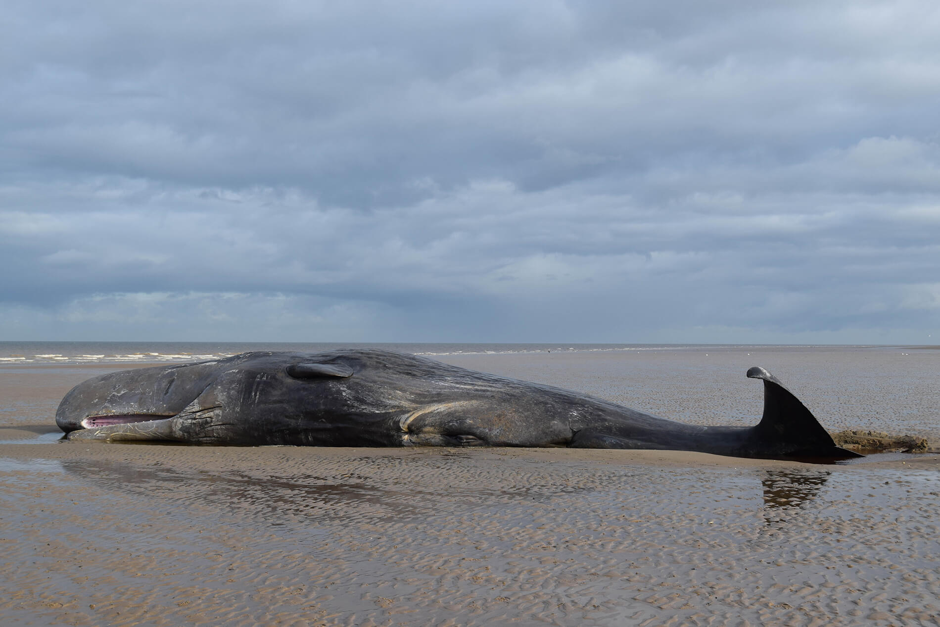 Whale dies after swallowing 8kg of plastic waste