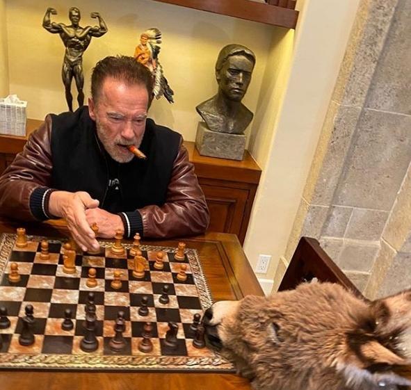 Арнольд Шварценеггер на карантине из-за COVID-19 играет в шахматы с ослицей