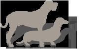 adult wild boar package image