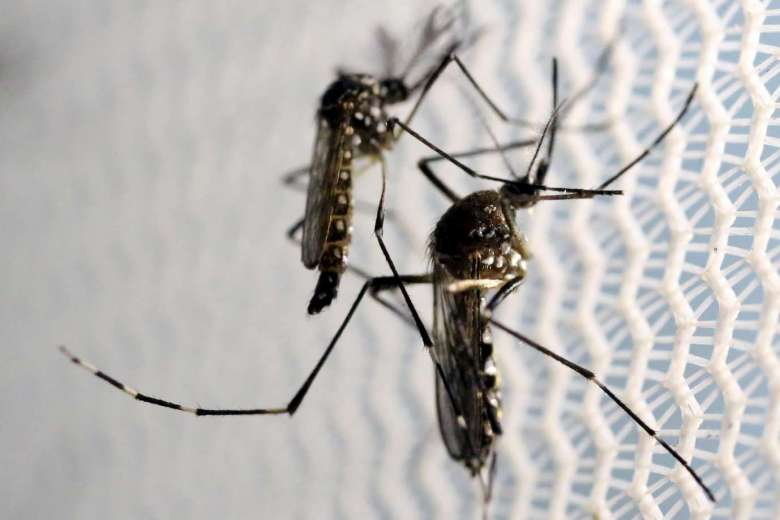 9 Things Your Doctor Wishes You Knew About Zika undefined